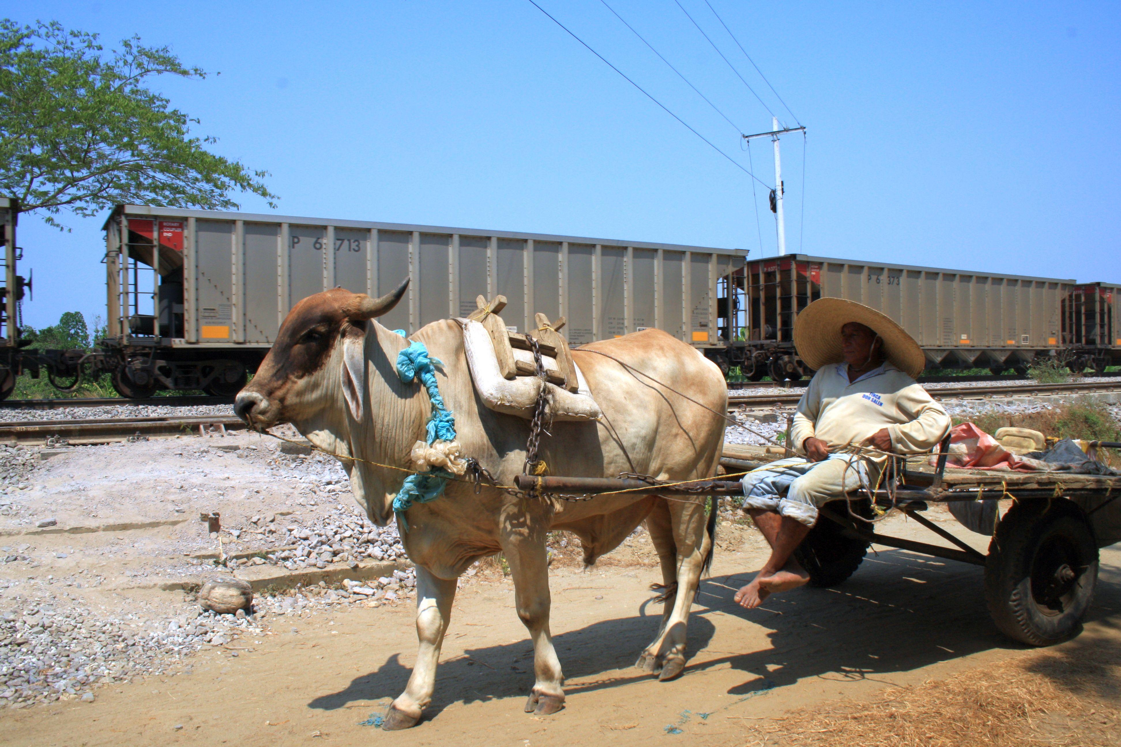 Die landwirtschaftliche Lebensweise der lokalen Bevölkerung wird vom Kohlenbau beeinträchtigt