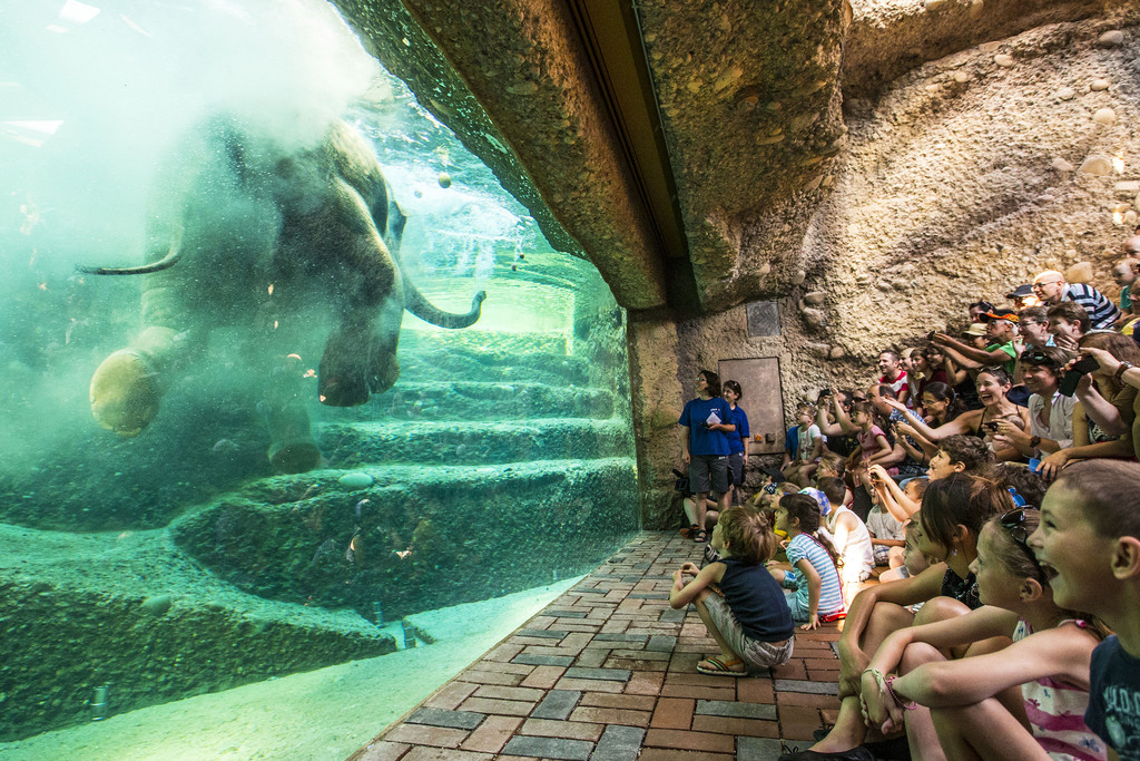 Publikumsmagnet: Besucher am Unterwasserfenster der neuen Elefantenhalle im Zoo Zürich.