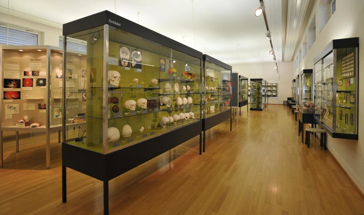 Anatomy Museum Melbourne