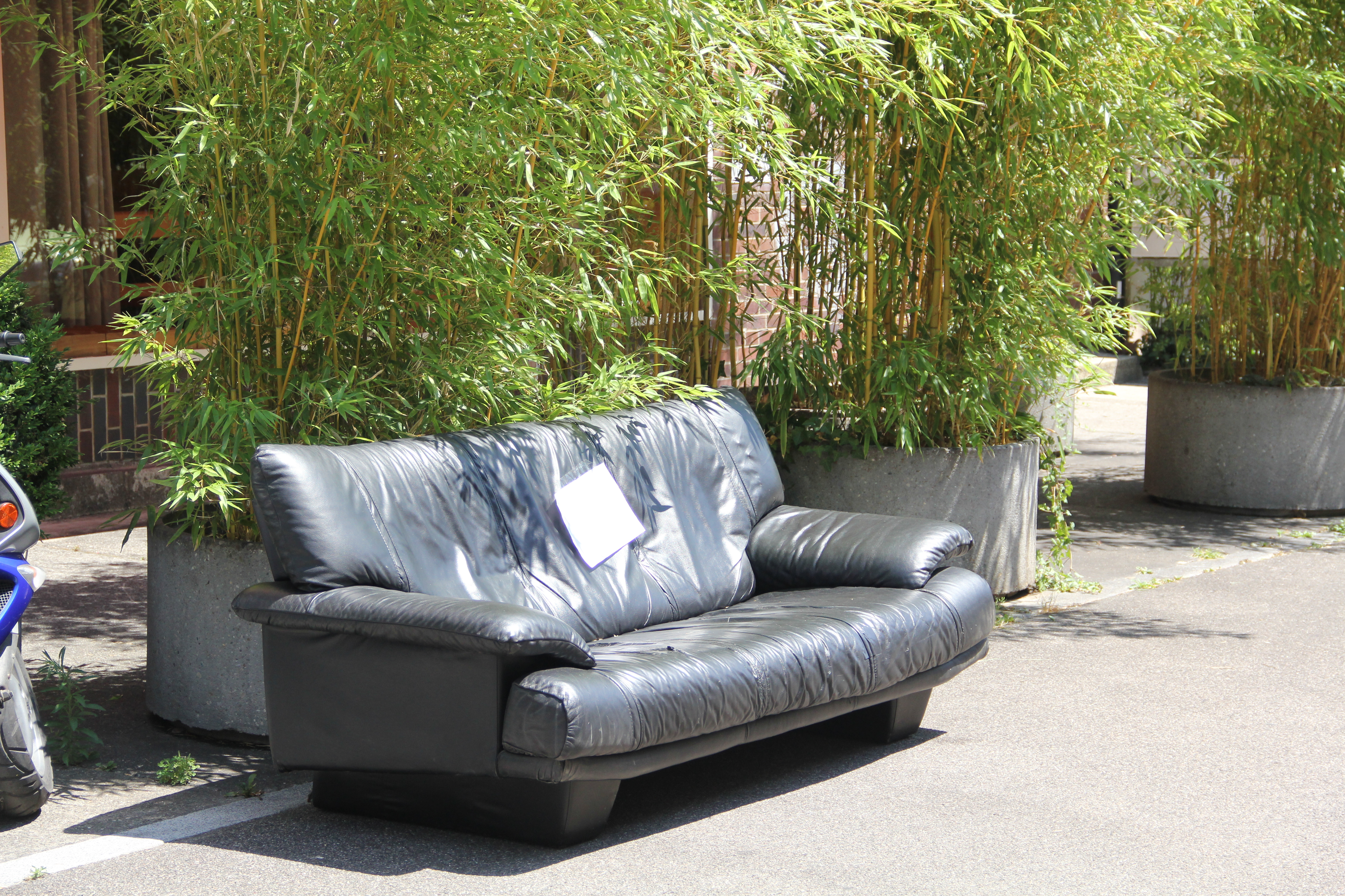 Ein Platz unter den Topfpflanzen: Dieses Sofa hielt es ziemlich lange an der Vogesenstrasse aus.