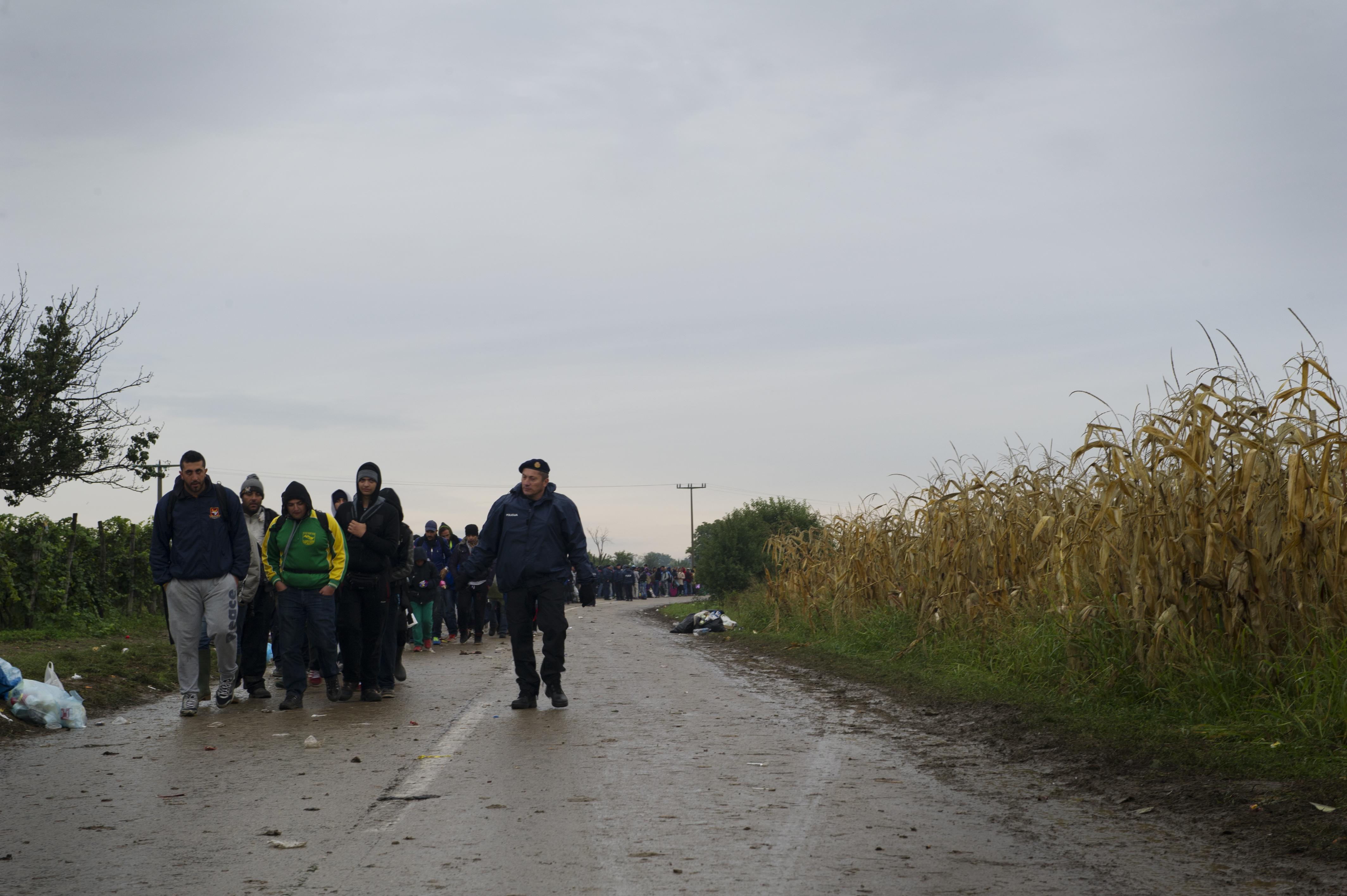 Tausende Flüchtling überqueren täglich die Serbisch-Kroatische Grenze.