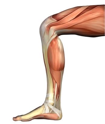 Das Knie und seine Beuger – mehr zum Thema gibt es mit einem Klick aufs Bild.