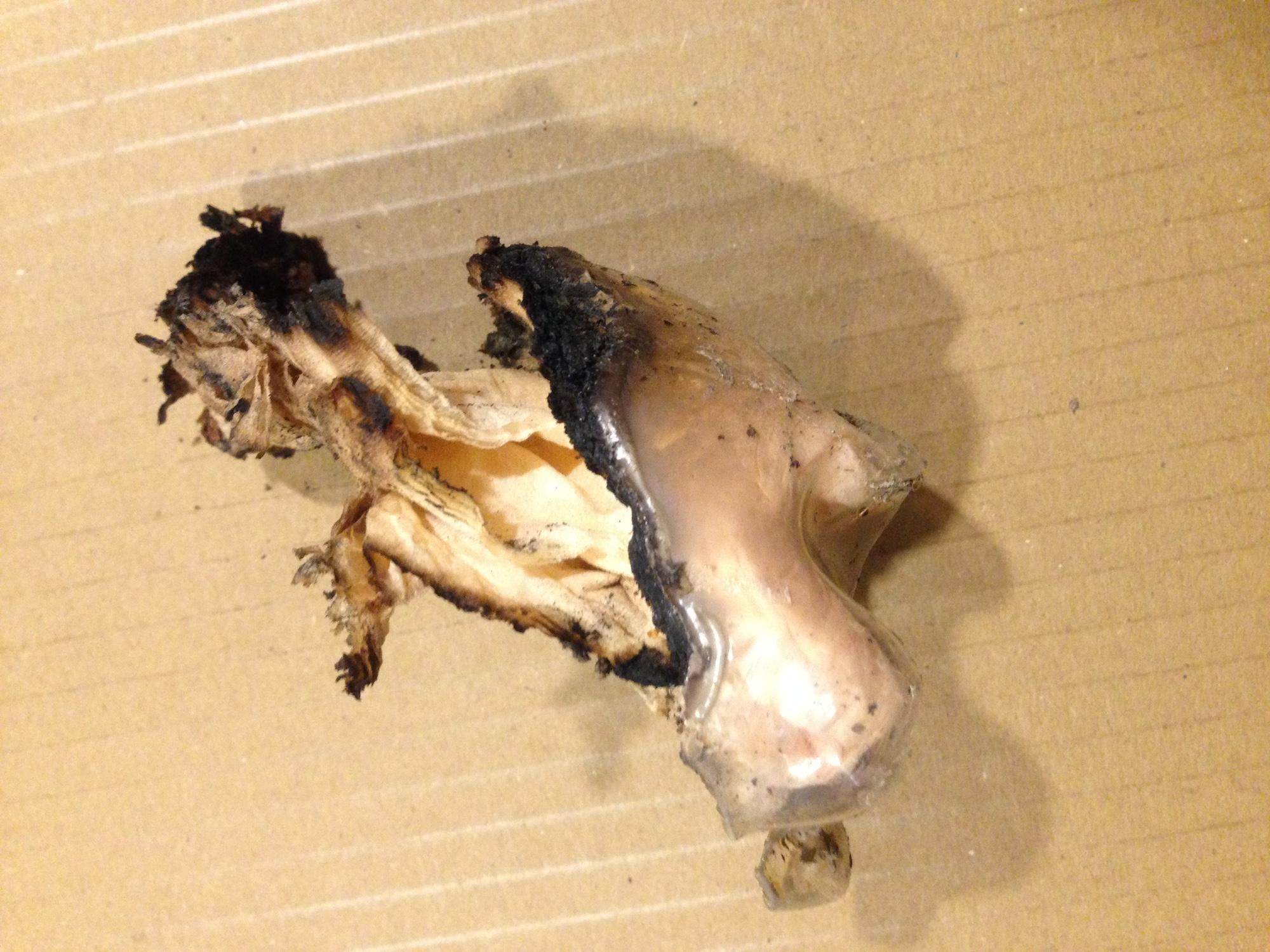 Die Überreste der PET-Flasche, die als Brandsatz verwendet wurde.