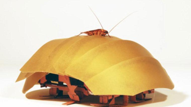 Kakerlaken Inspirierter Roboter Als Katastrophenhelfer Tageswoche