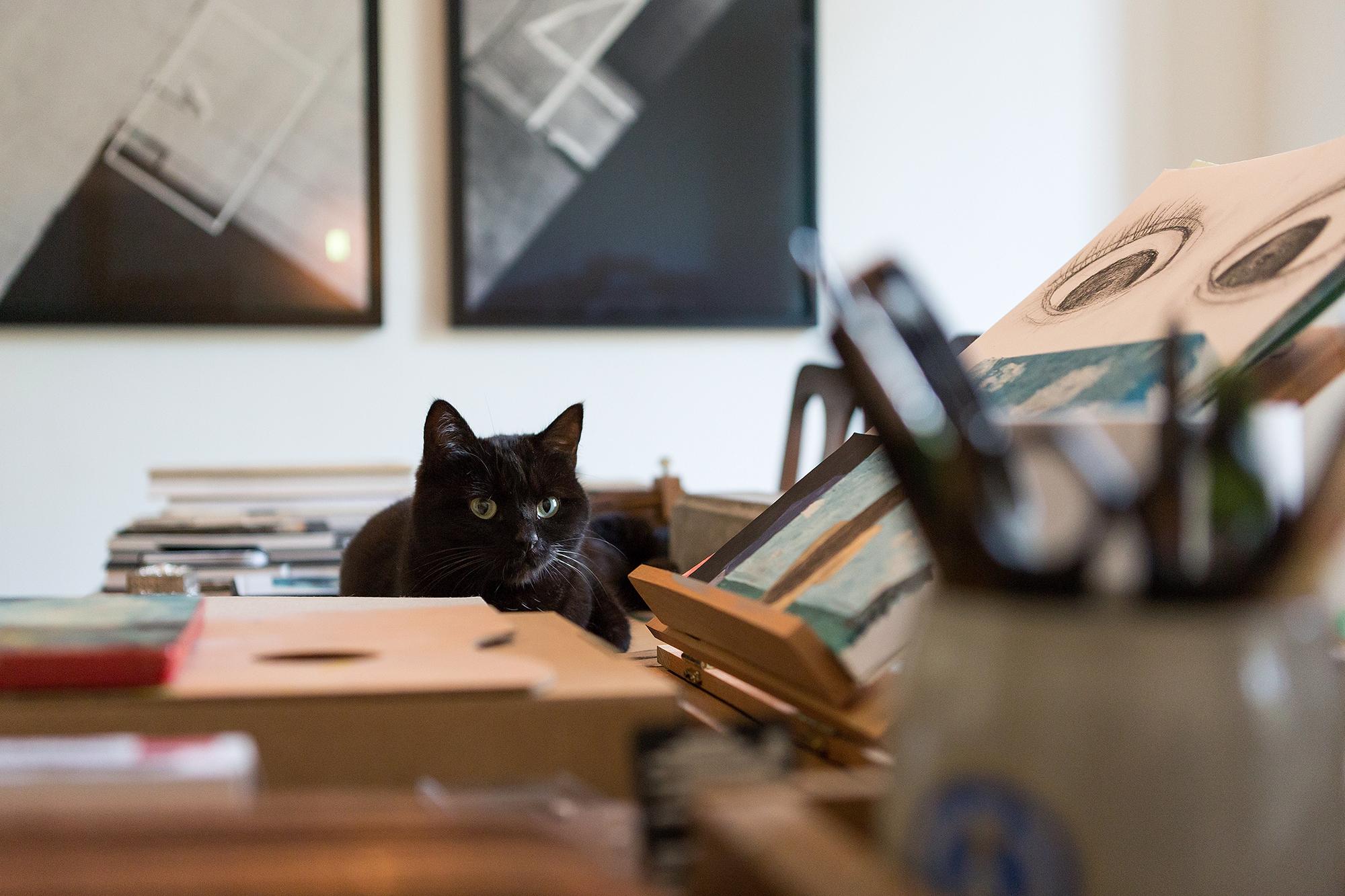 Katzen ruhen sich am liebsten dort aus, wo kreativ gearbeitet wird — auch Katze