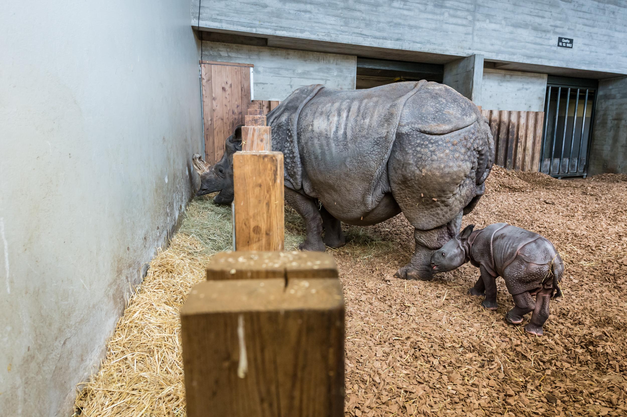 Mutter und Sohn im Nashornhaus, das nun wieder fürs Publikum geöffnet hat. Man solle sich aber aus Rücksicht ruhig verhalten.