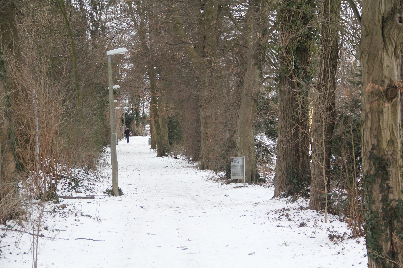 Wo sich Anwohner einst zu nächtlicher Stunde fürchteten: Ursprünglich war das Schlangenweglein ein unbeleuchteter Trampelpfad auf dem damals noch wenig bebauten Bruderholz.