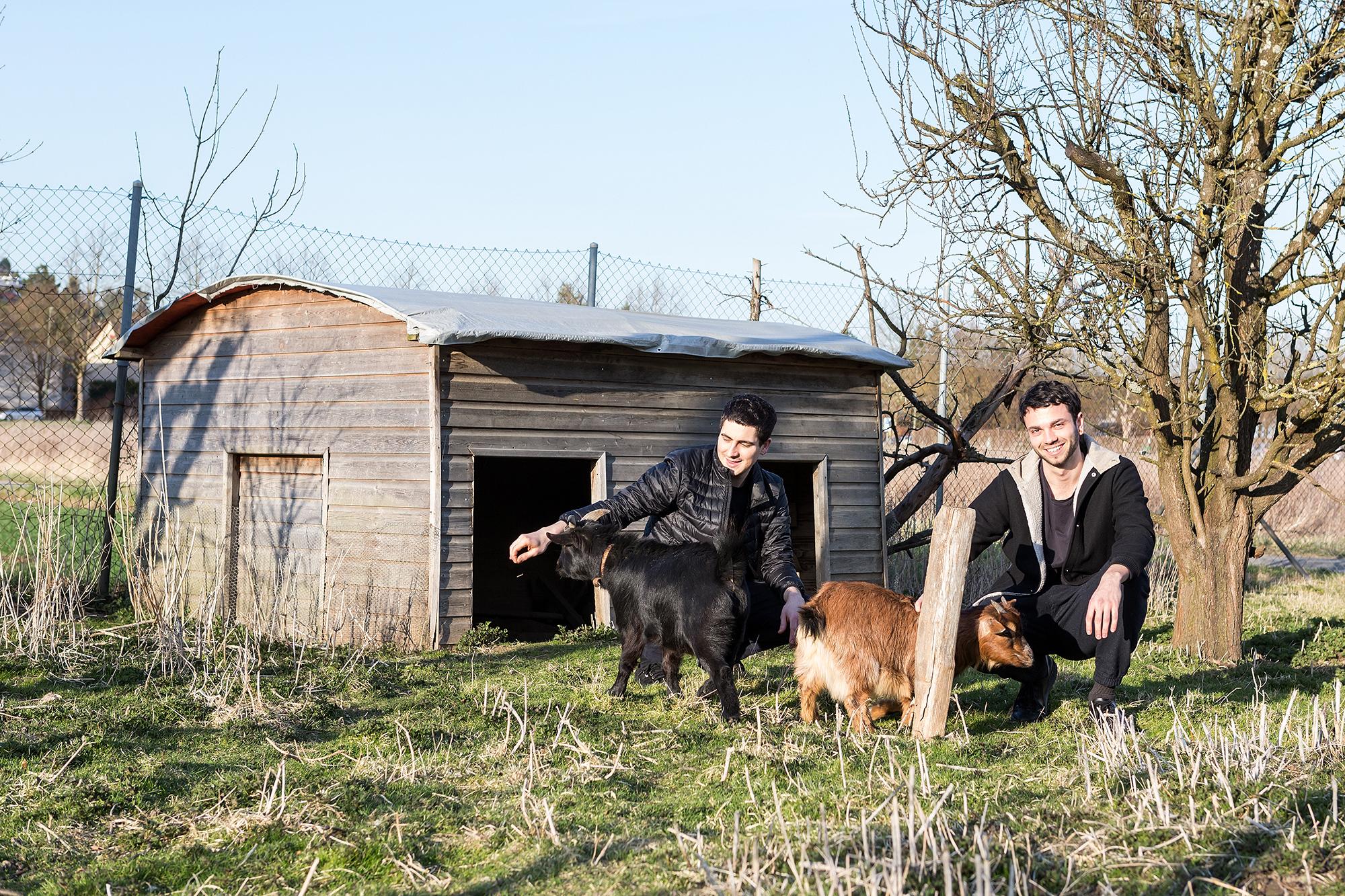 Die beiden Ziegen geniessen den Besuch der DJs.