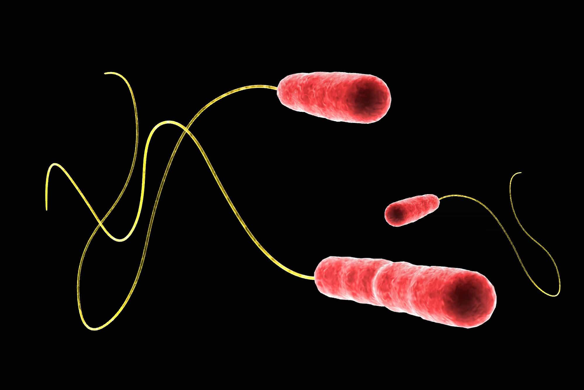 Legionellen im Wasser sind erst dann gefährlich, wenn sie über den feinen Nebel der Wassertröpfchen eingeatmet werden.