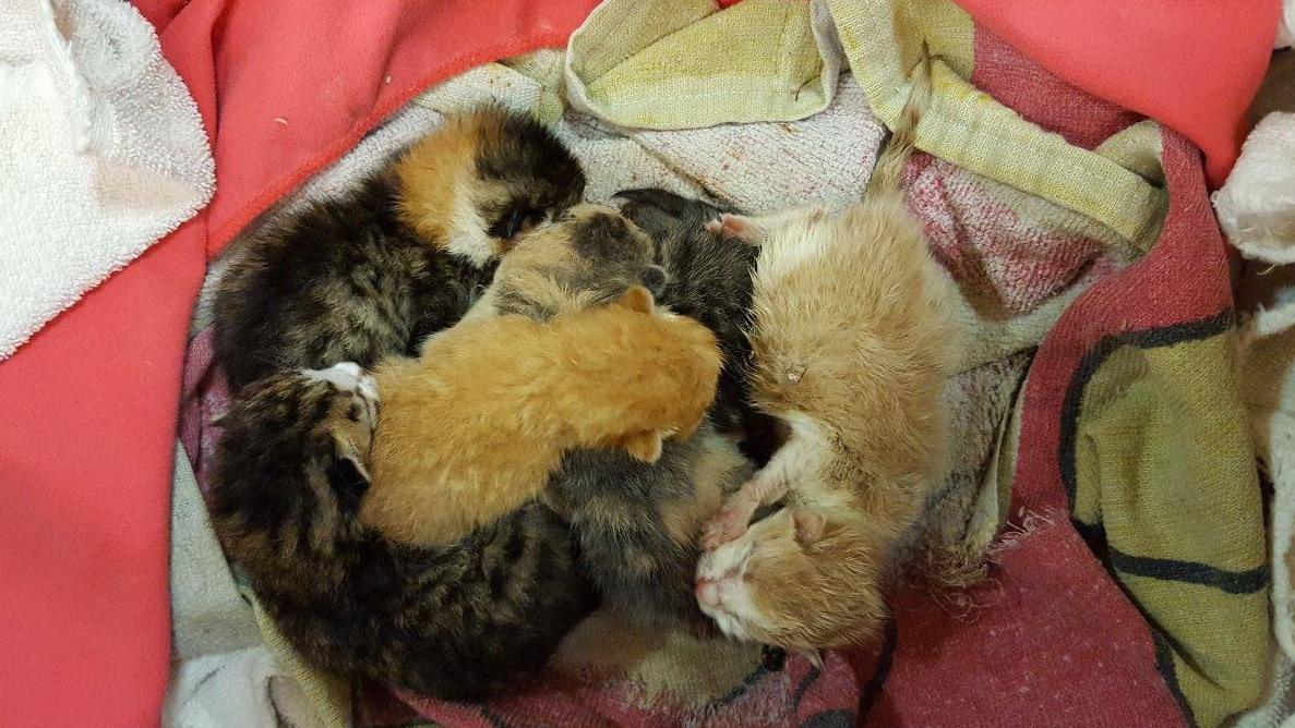 Ohne ihre Mutter sind diese Kätzchen nicht überlebensfähig.
