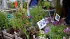 Blumen und Gemüse wachsen auch im Spätherbst und Winter.