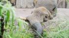 Jack kam im Mai nach Basel und hat den Elefantendamen seither keinen Ärger beschert.