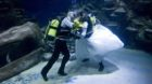 Aquarists James Oliver And Kathryn O'Connor At The Sea Life London Aquarium Are Proving Just How Deep Their Love Is This Vale