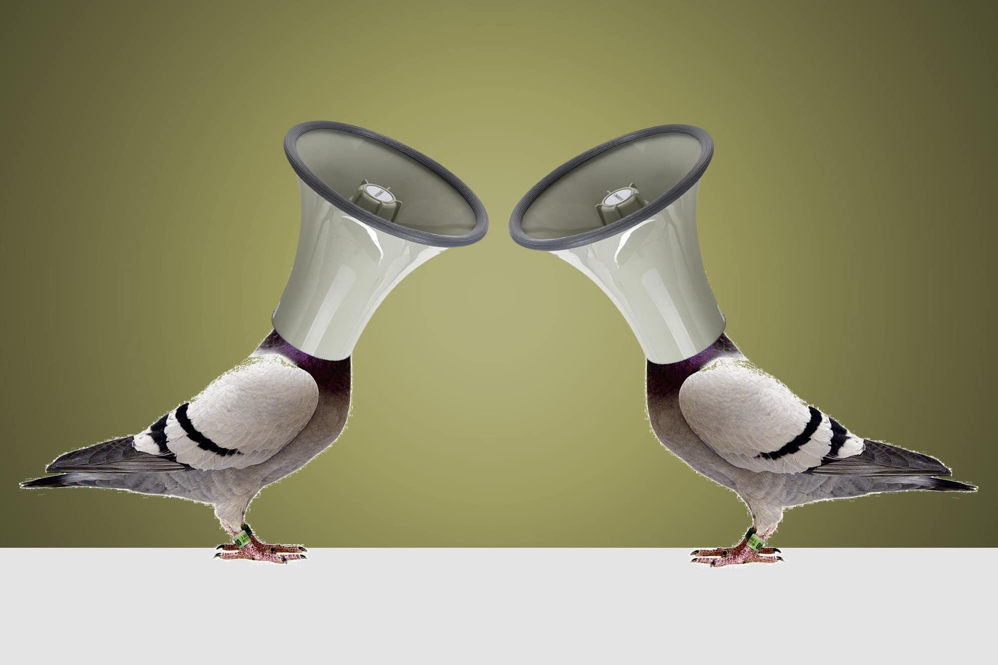 Taubenfüttern wird verboten. Dafür darf man sie neu zudröhnen.