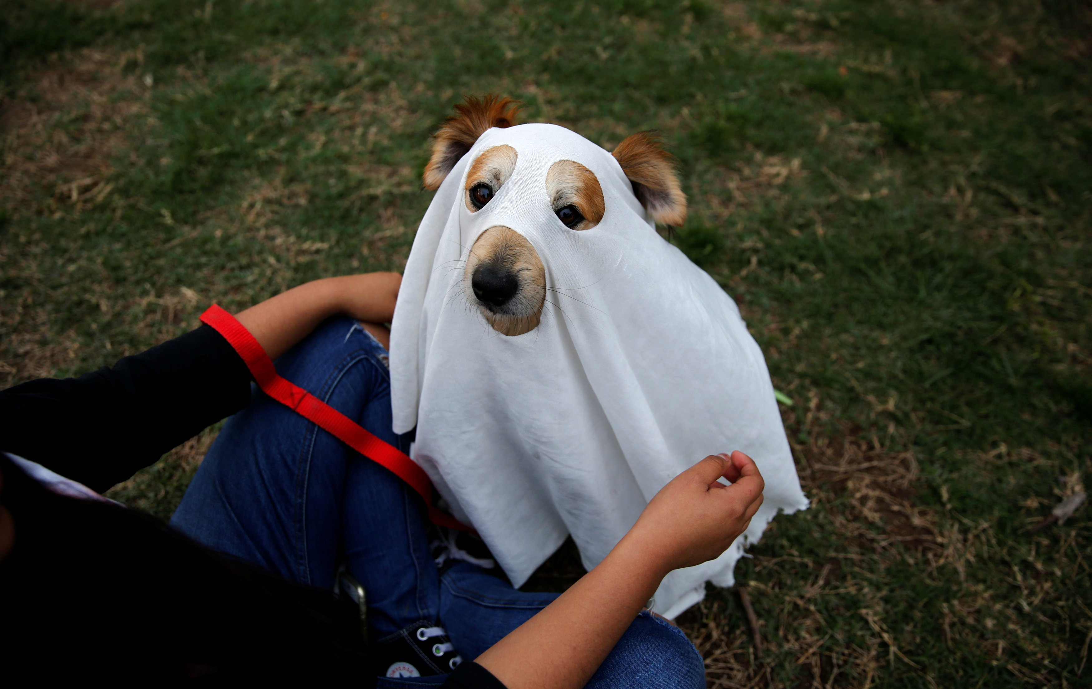 A woman dresses up her dog to celebrate Halloween at a park in Lima, Peru, October 31, 2017. REUTERS/Mariana Bazo