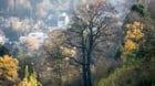Wem gehört der Wald? Spannungsfeld Waldnutzung.