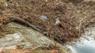 Jede Menge Müll zwischen dem Schwemmholz. Die Wiese hat nach einem Sturm zu leiden.