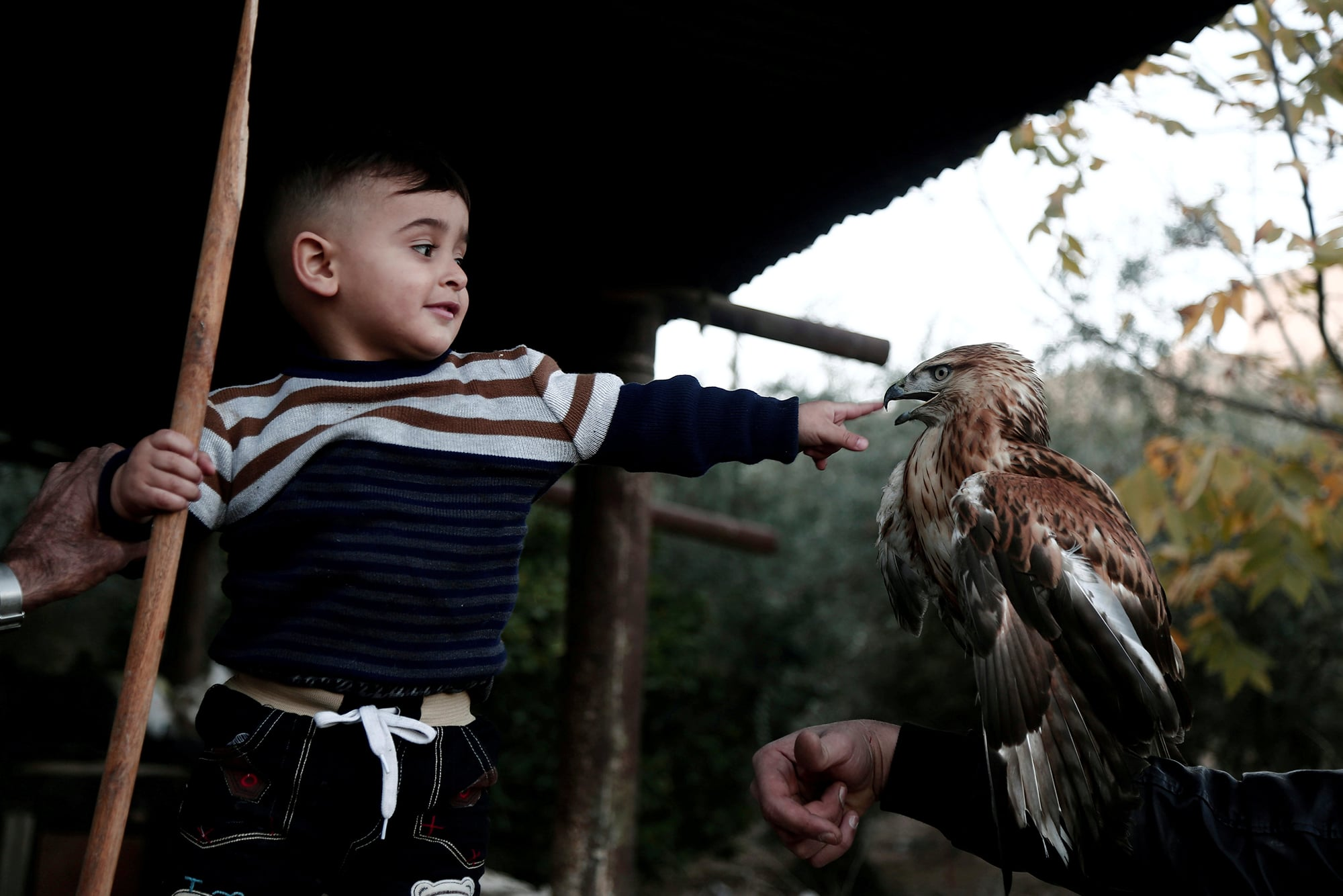 A Palestinian boy plays with a falcon in the West Bank town of Tubas December 3, 2017. Picture taken December 3, 2017. REUTER