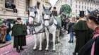 Fasnachtspferde stehen ab dieser Fasnacht unter Ärztlicher Aufsicht.