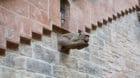 Dieser Wasserspeier in einem Ratshaus-Hinterhof scheint der Grossratsdebatte über Affen-Grundrechte angespannt zu folgen.