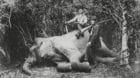 Fritz und Paul Sarasin in den 1880er-Jahren auf einem erlegten Elefanten  in Ceylon.