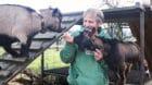 Heinrich Gugelmann ist seit sechsundvierzig Jahren Direktor und Dompteur des Haustierzirkus «Circus Maus»