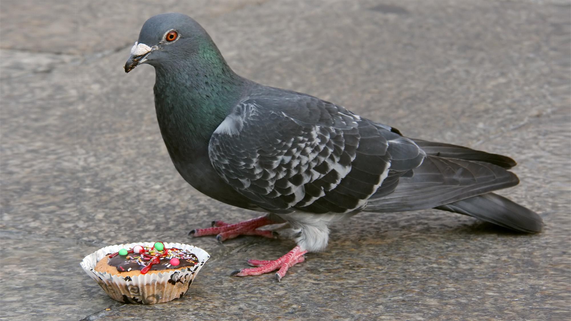 «Keine Tauben füttern!» Diese Aufforderung allein reicht nicht.