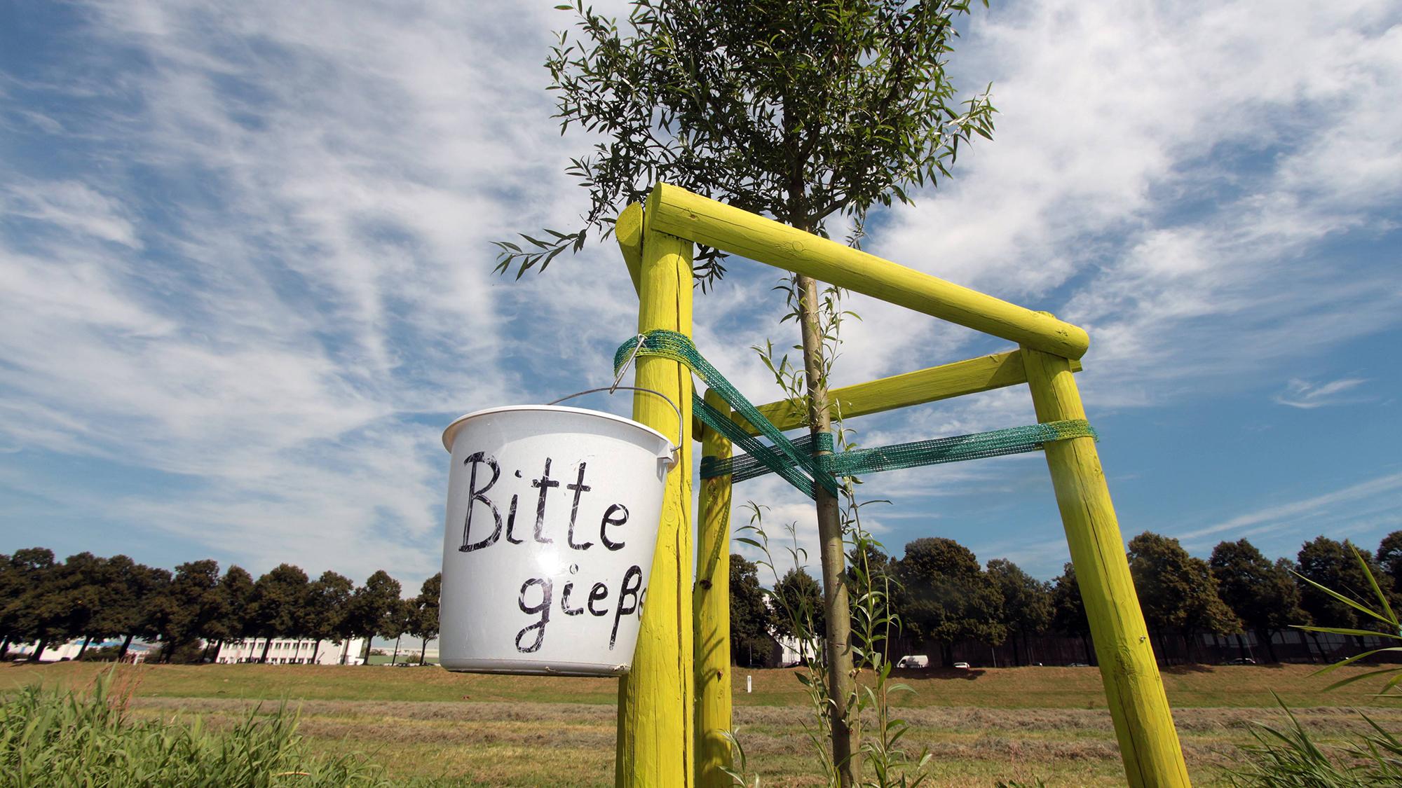 Symbolfoto Trockenheit im Sommer: ein Eimer mit Aufschrift bitte gieflen an einem neugepflanzten Baum am Rhein an den Poller