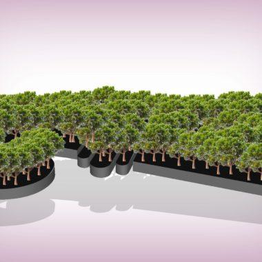 Mehr Bäume für Basel – die neue Grüne Wohnpolitik – TagesWoche